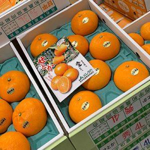 柑橘の大トロせとか化粧箱入り2L 12個入【税込・送料込】